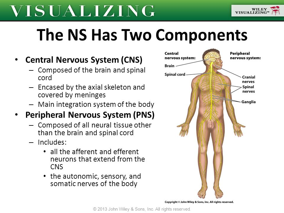 The NS Has Two Components
