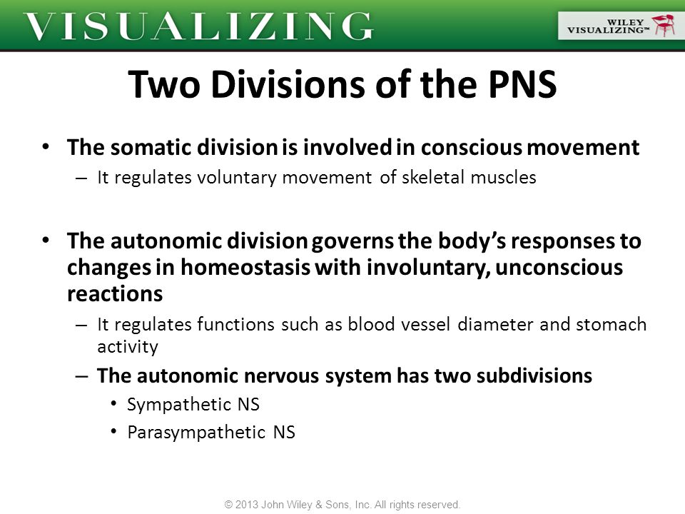 Two Divisions of the PNS