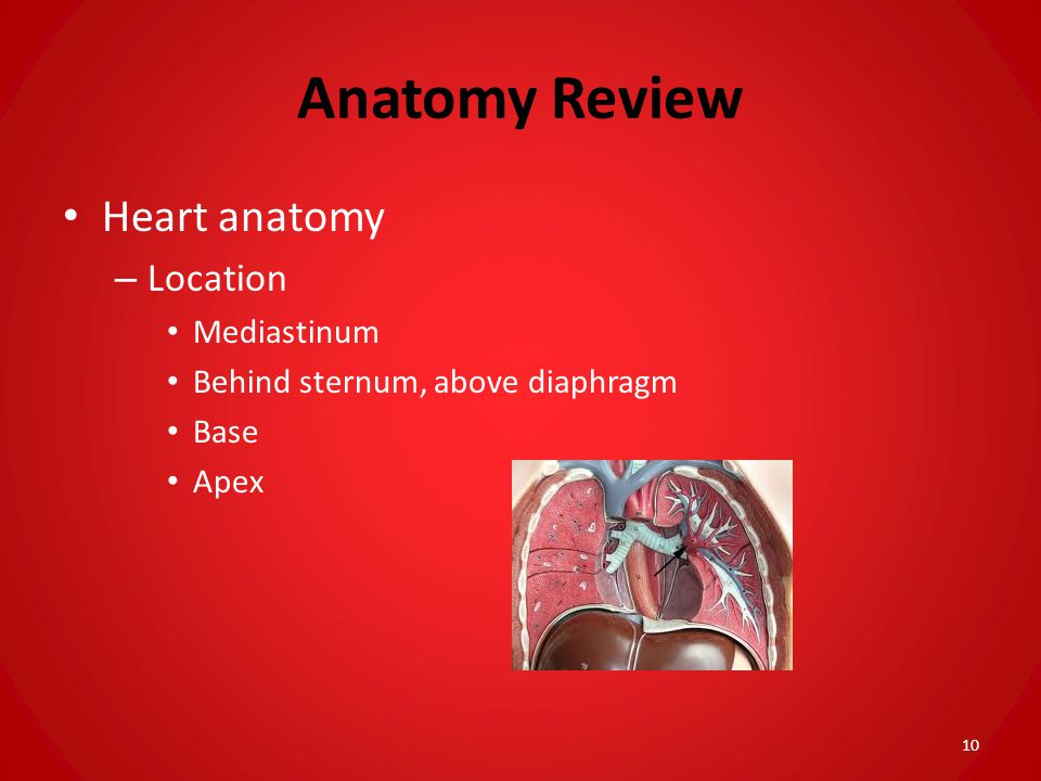 Anatomy Review Heart anatomy Location Mediastinum