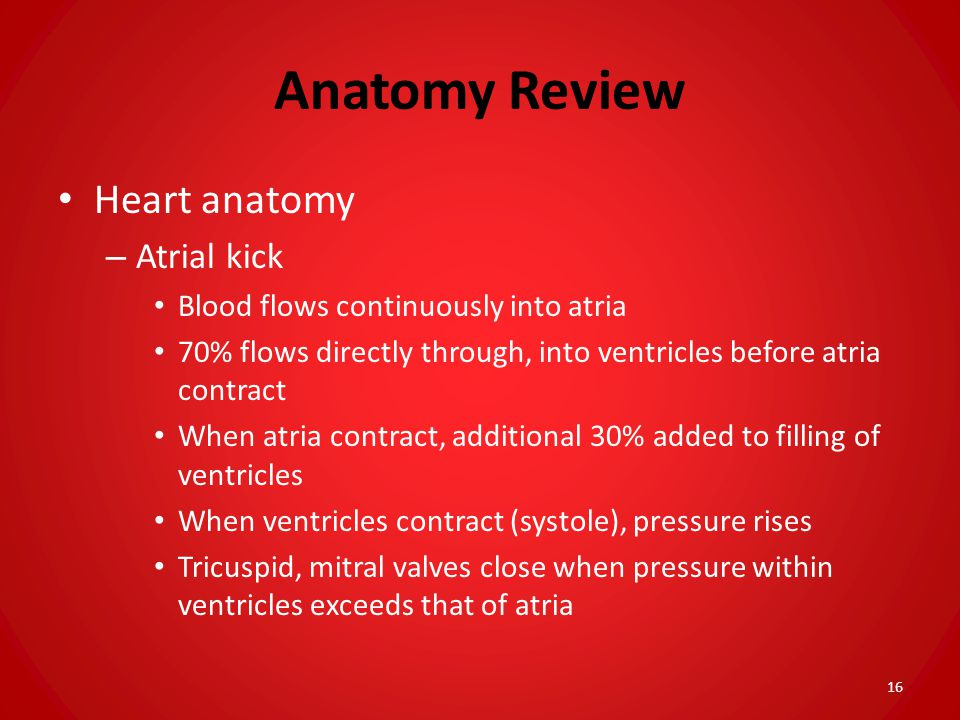 Anatomy Review Heart anatomy Atrial kick