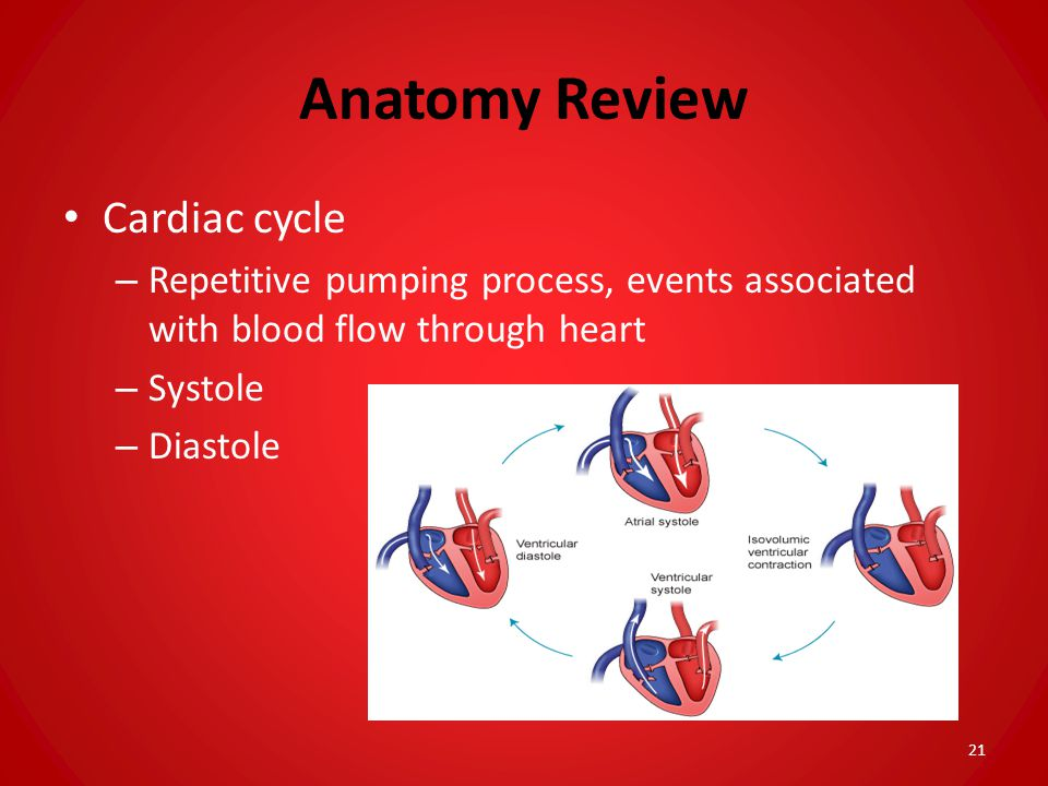 Anatomy Review Cardiac cycle