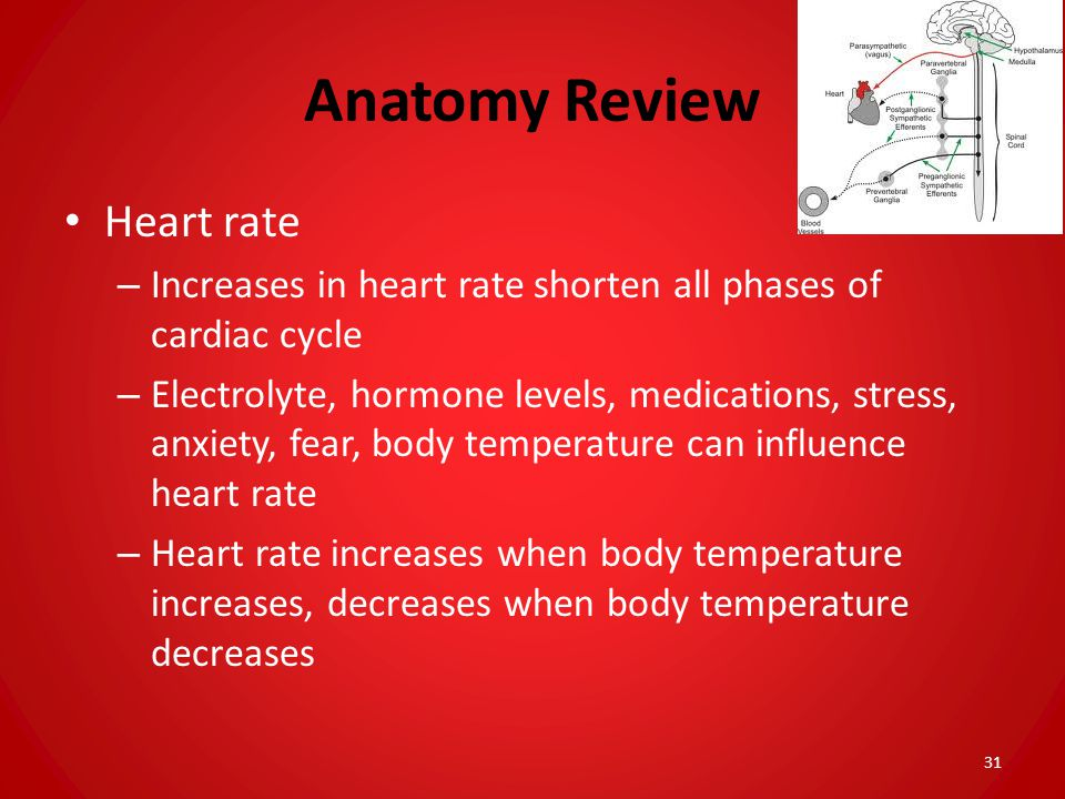 Anatomy Review Heart rate