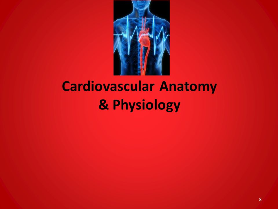 Cardiovascular Anatomy & Physiology