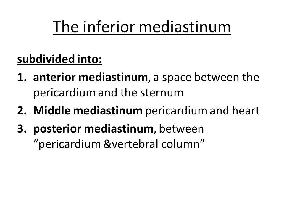 The inferior mediastinum