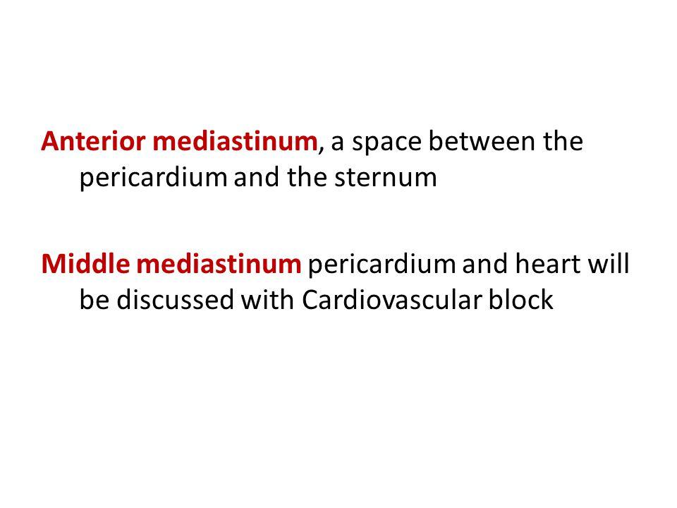 Anterior mediastinum, a space between the pericardium and the sternum