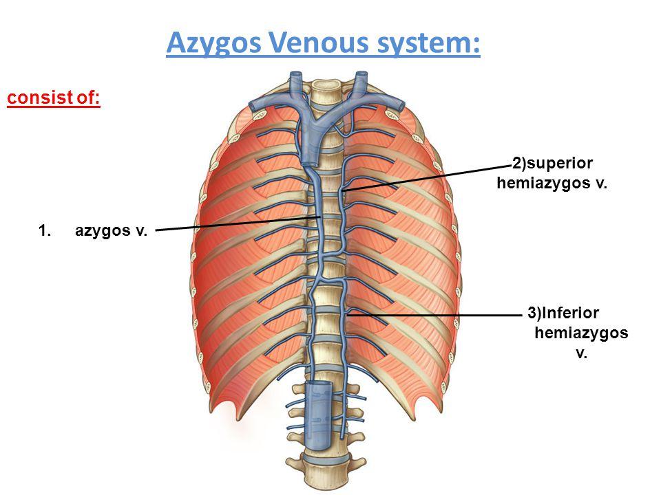 2)superior hemiazygos v. 3)Inferior hemiazygos v.