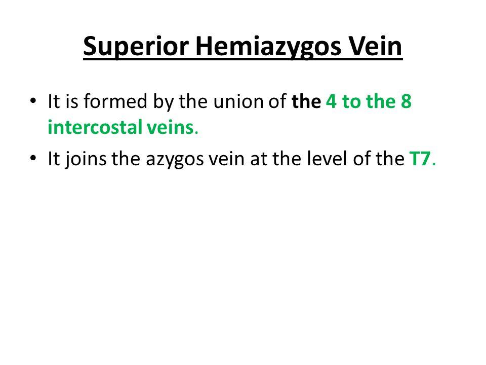 Superior Hemiazygos Vein