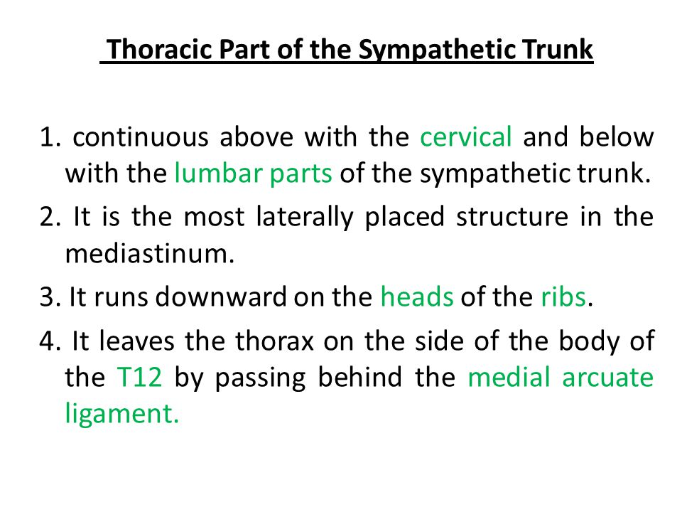 Thoracic Part of the Sympathetic Trunk 1