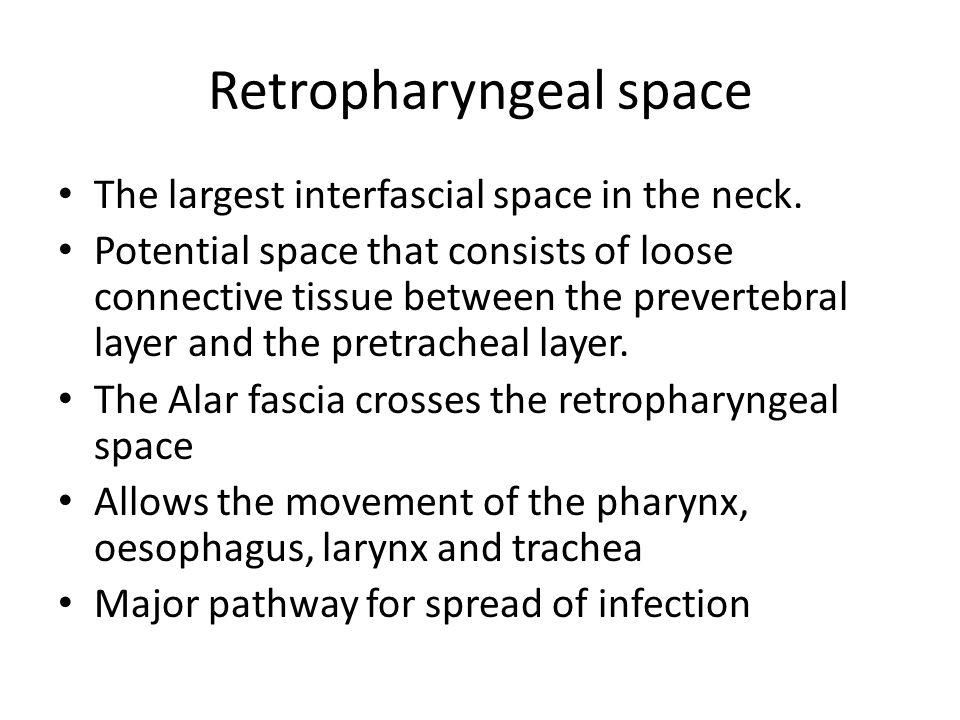 Retropharyngeal space
