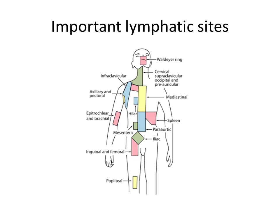 Important lymphatic sites