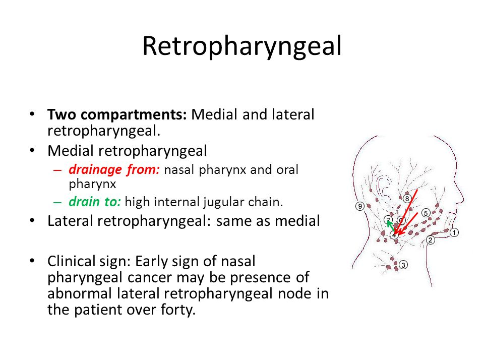 Retropharyngeal Two compartments: Medial and lateral retropharyngeal.