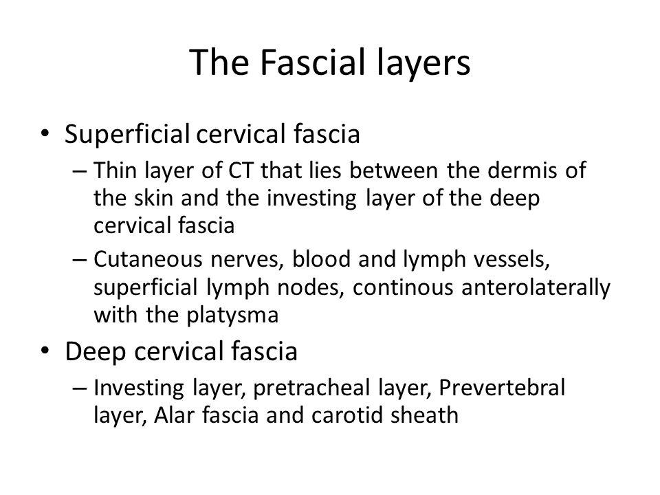 The Fascial layers Superficial cervical fascia Deep cervical fascia