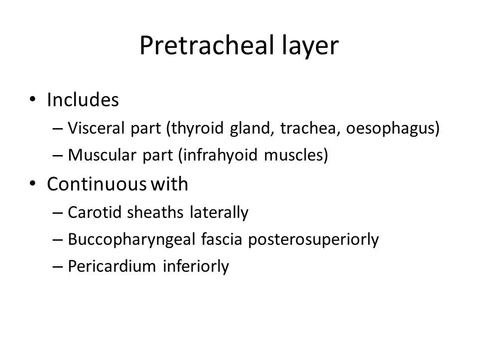 Pretracheal layer Includes Continuous with