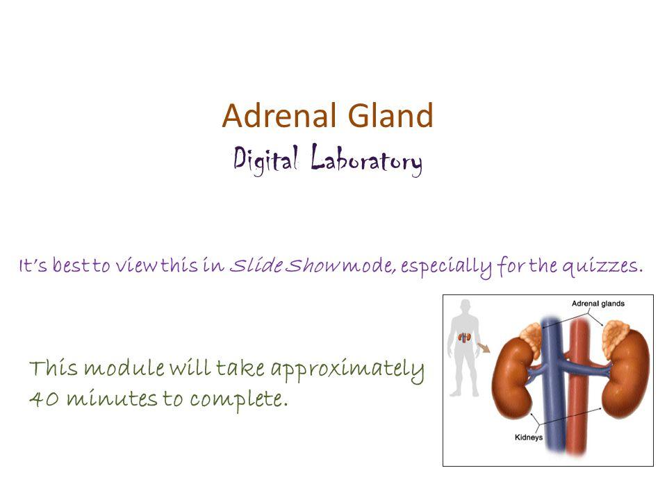 Adrenal Gland Digital Laboratory