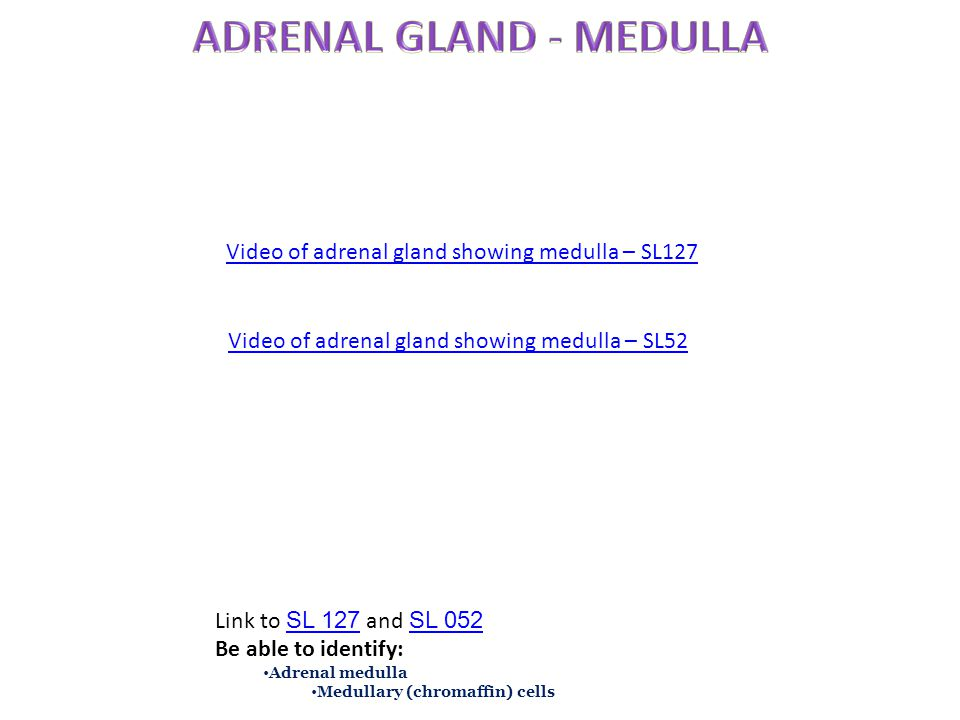 ADRENAL GLAND - MEDULLA