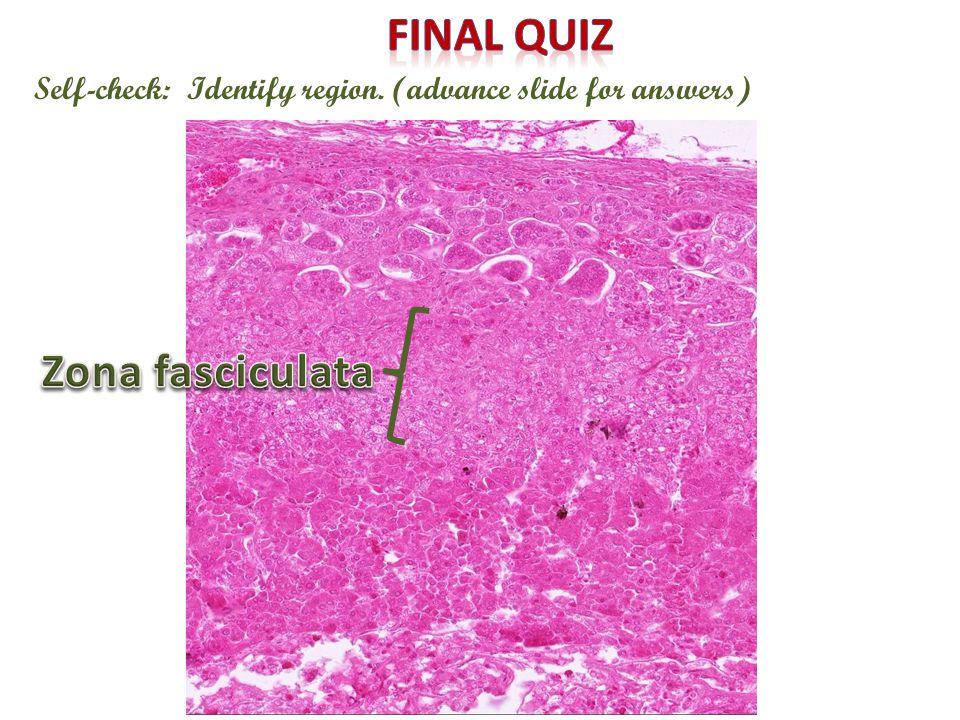 Final quiz Zona fasciculata