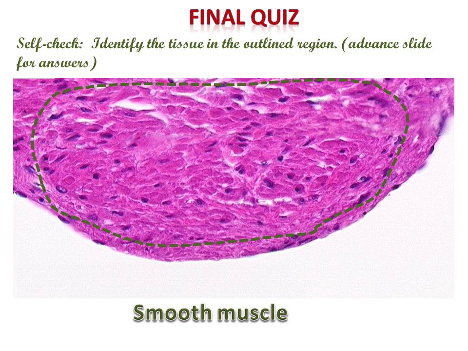 Final quiz Smooth muscle