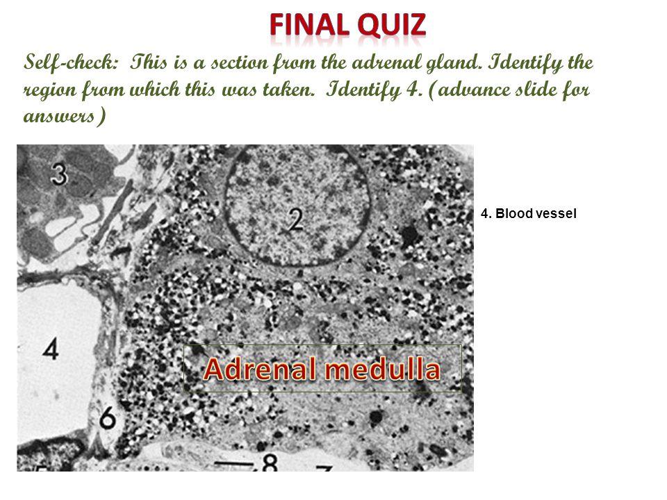 Final quiz Adrenal medulla