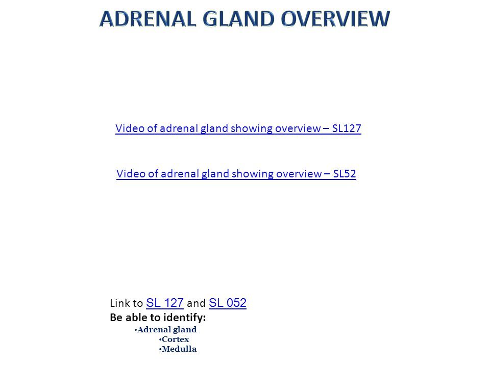 ADRENAL GLAND OVERVIEW