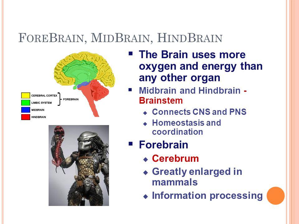 ForeBrain, MidBrain, HindBrain