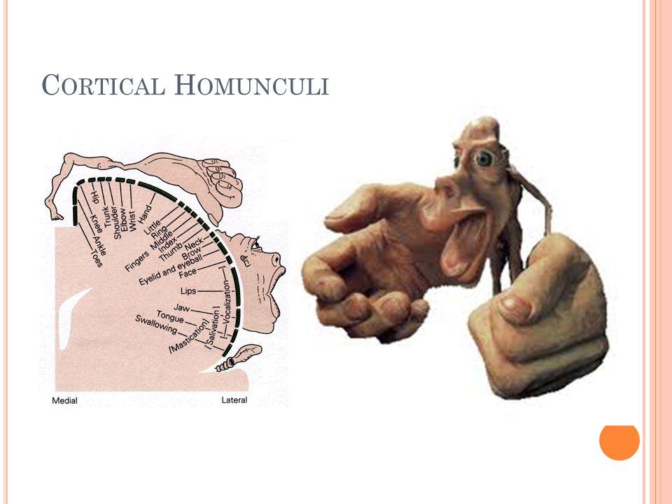 Cortical Homunculi