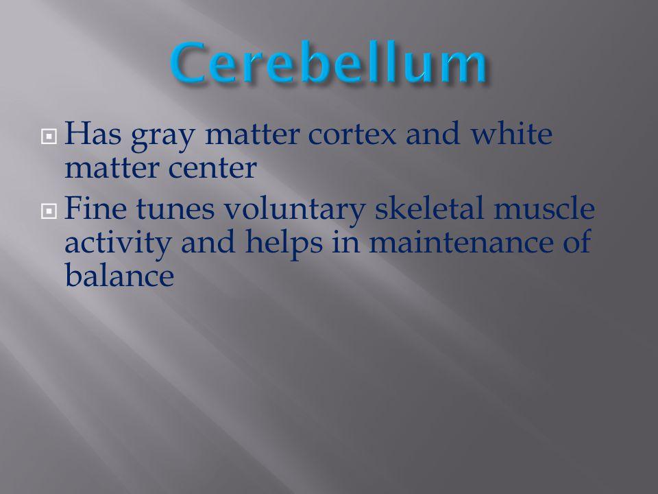 Cerebellum Has gray matter cortex and white matter center