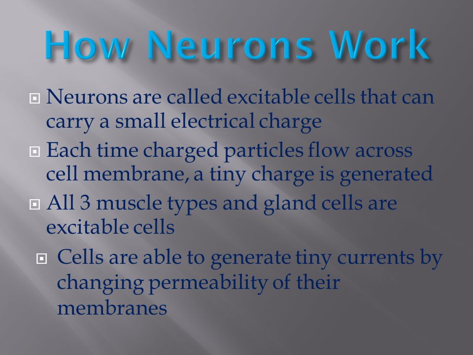 How Neurons Work Neurons are called excitable cells that can carry a small electrical charge.