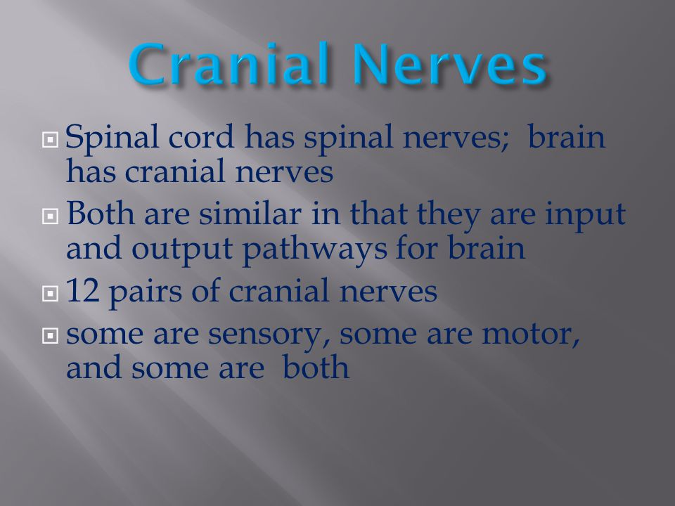 Cranial Nerves Spinal cord has spinal nerves; brain has cranial nerves