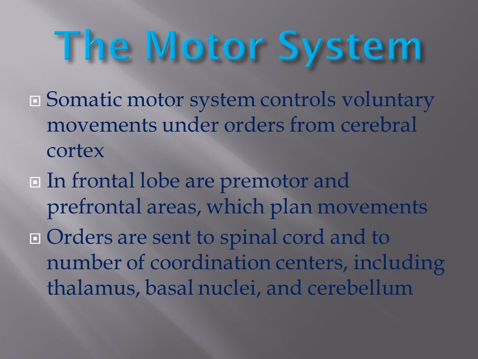 The Motor System Somatic motor system controls voluntary movements under orders from cerebral cortex.
