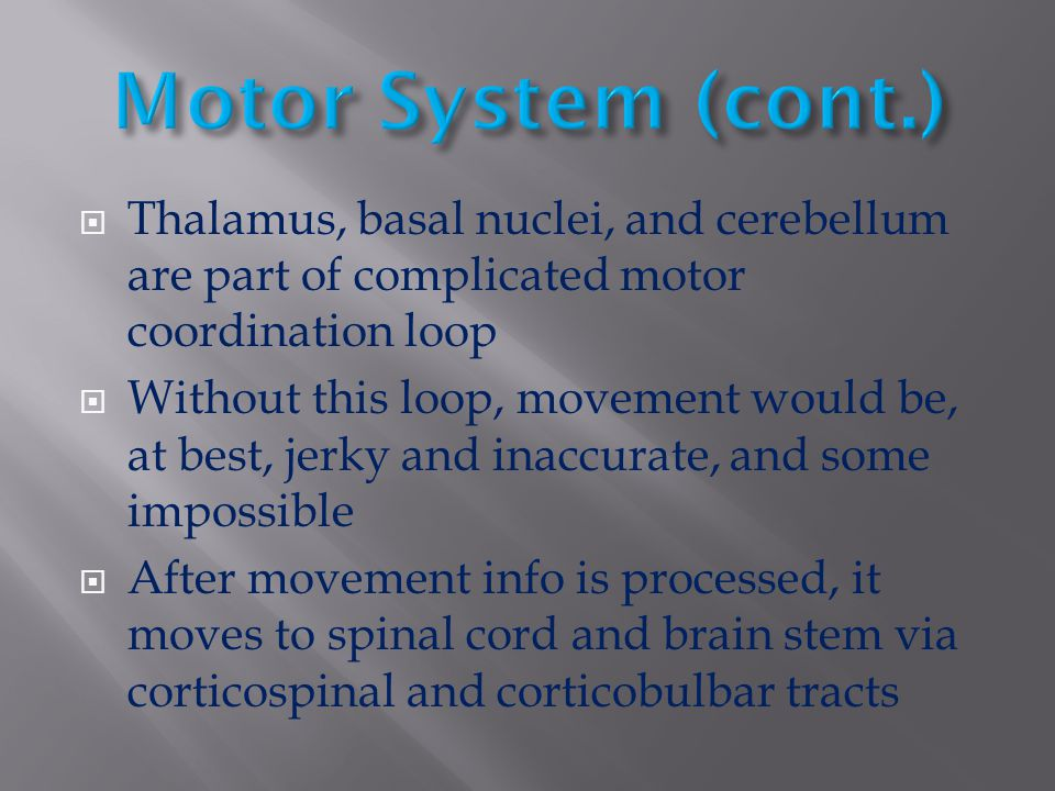 Motor System (cont.) Thalamus, basal nuclei, and cerebellum are part of complicated motor coordination loop.