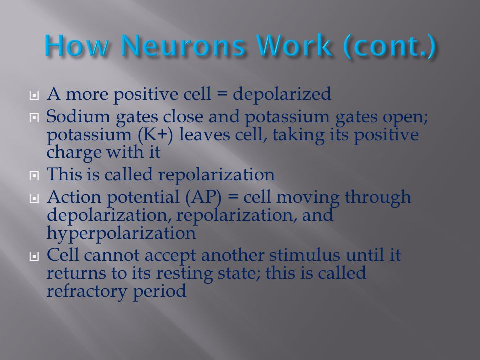 How Neurons Work (cont.)