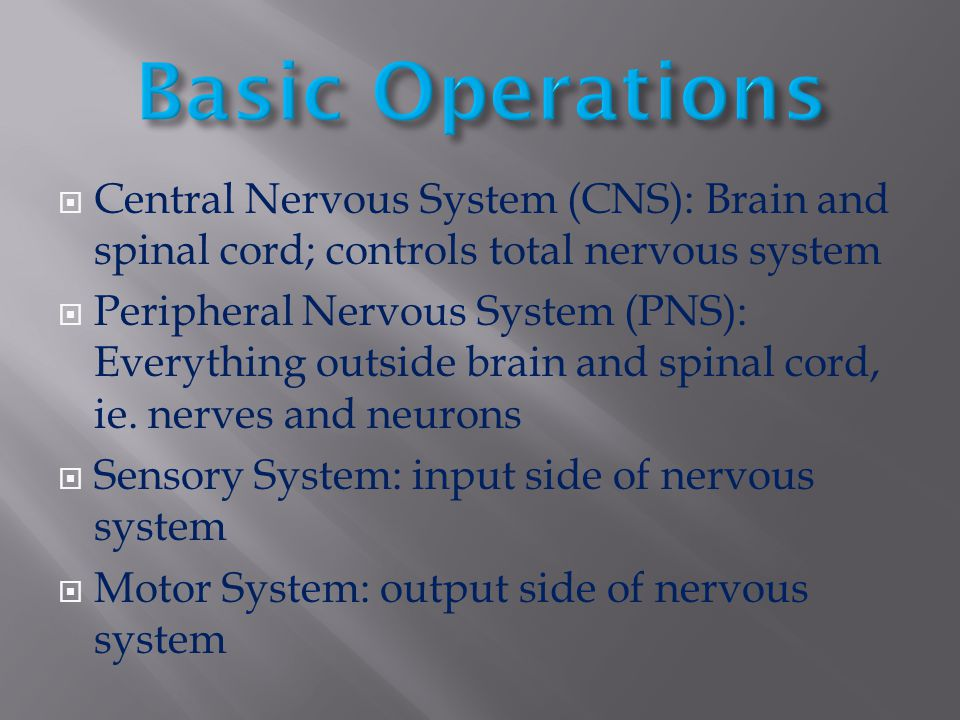 Basic Operations Central Nervous System (CNS): Brain and spinal cord; controls total nervous system.