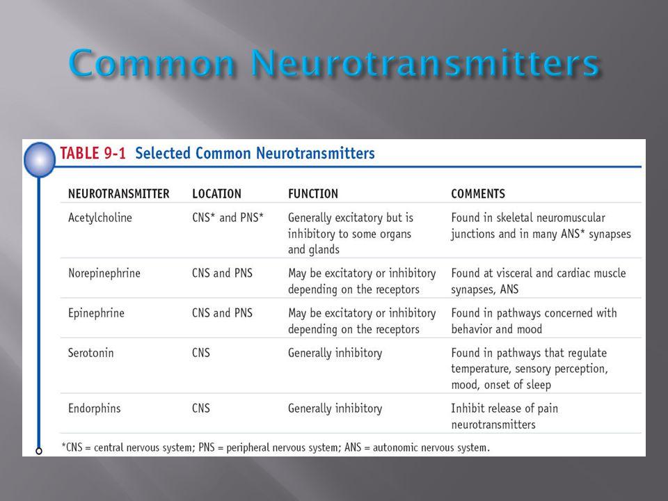 Common Neurotransmitters