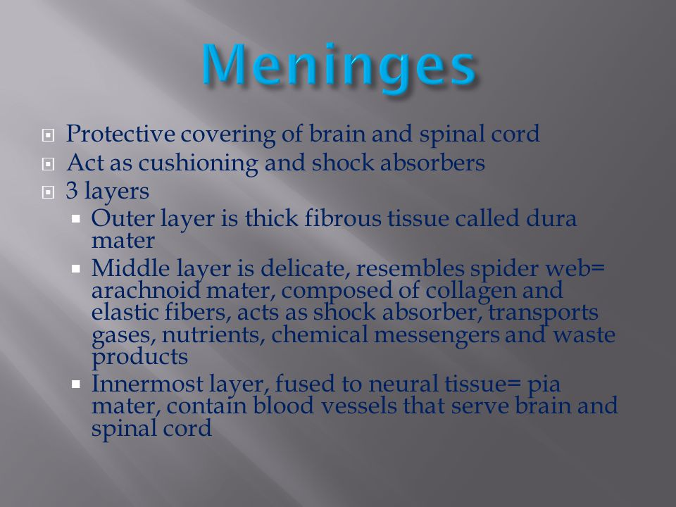 Meninges Protective covering of brain and spinal cord