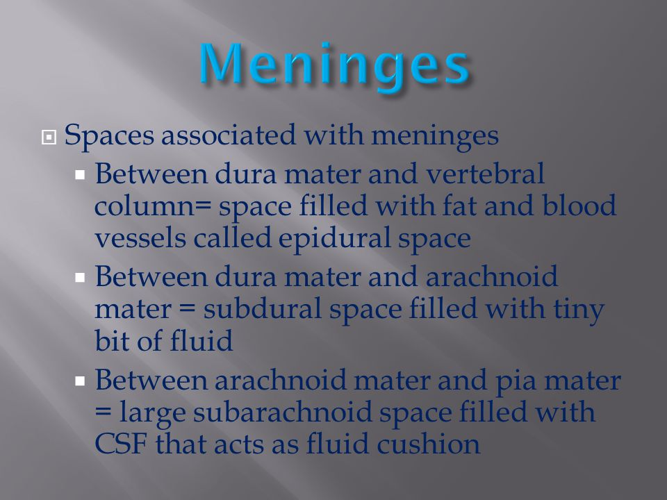 Meninges Spaces associated with meninges