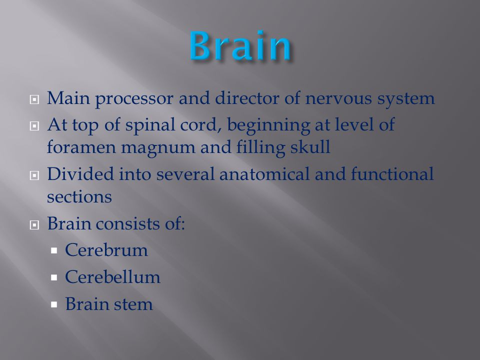 Brain Main processor and director of nervous system
