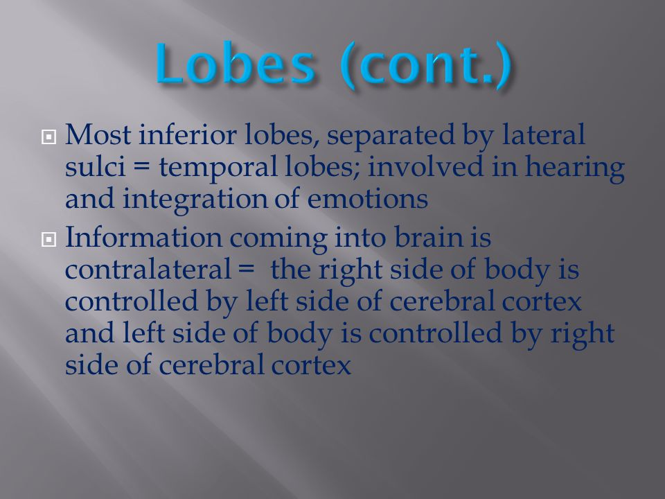Lobes (cont.) Most inferior lobes, separated by lateral sulci = temporal lobes; involved in hearing and integration of emotions.