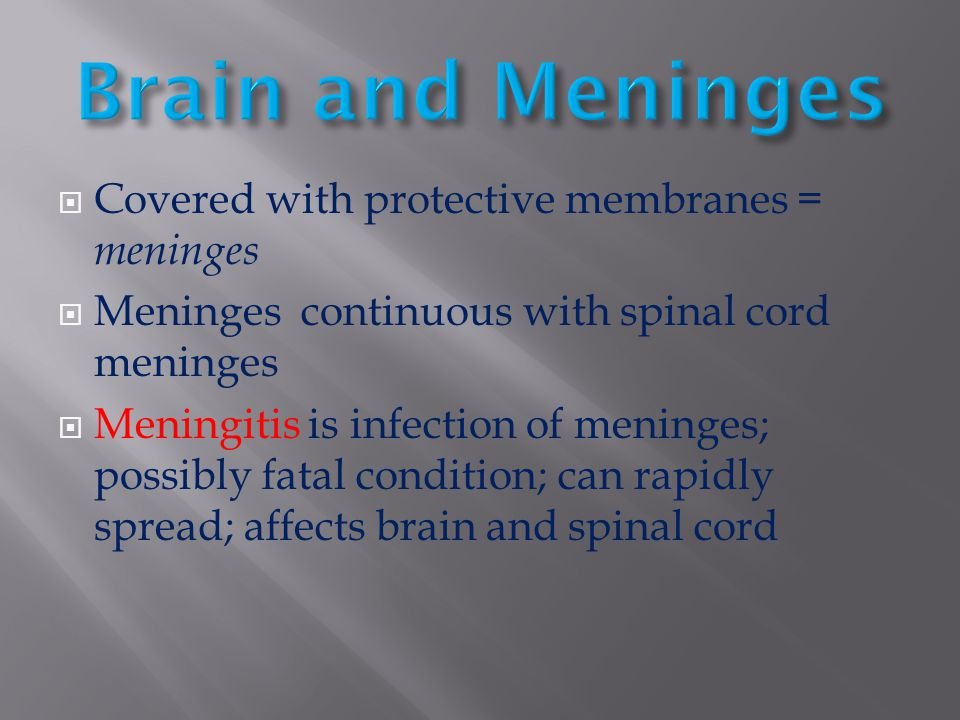 Brain and Meninges Covered with protective membranes = meninges