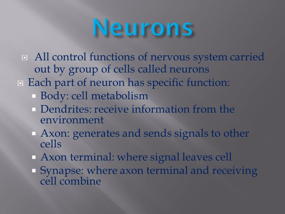 Neurons All control functions of nervous system carried out by group of cells called neurons. Each part of neuron has specific function: