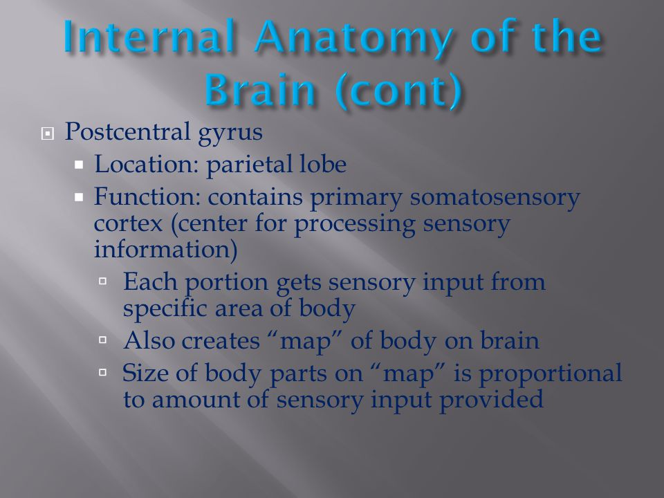 Internal Anatomy of the Brain (cont)