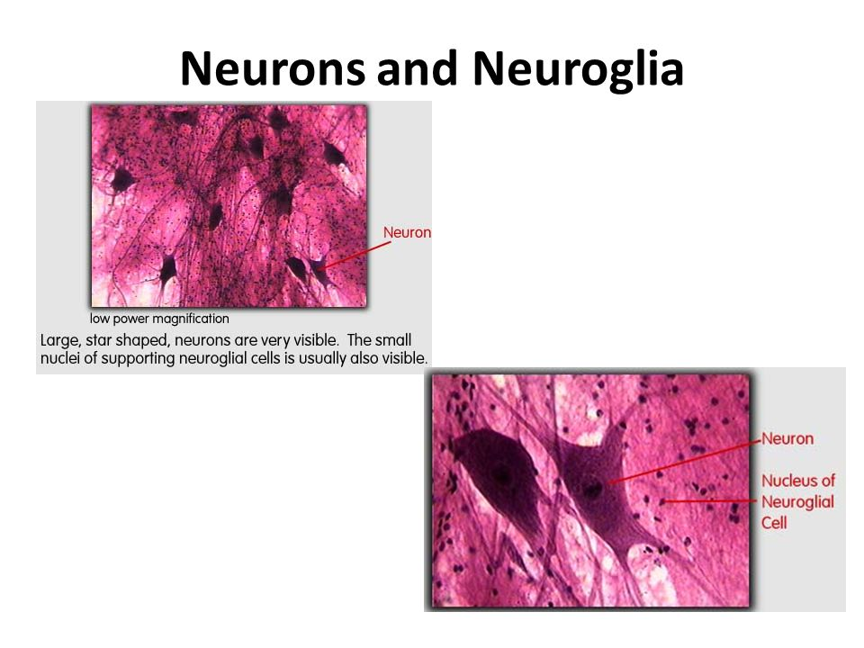 Nervous Tissue. - ppt video online download