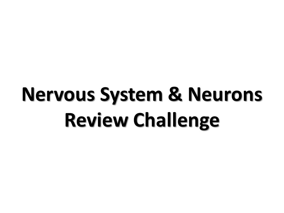 Nervous System & Neurons Review Challenge