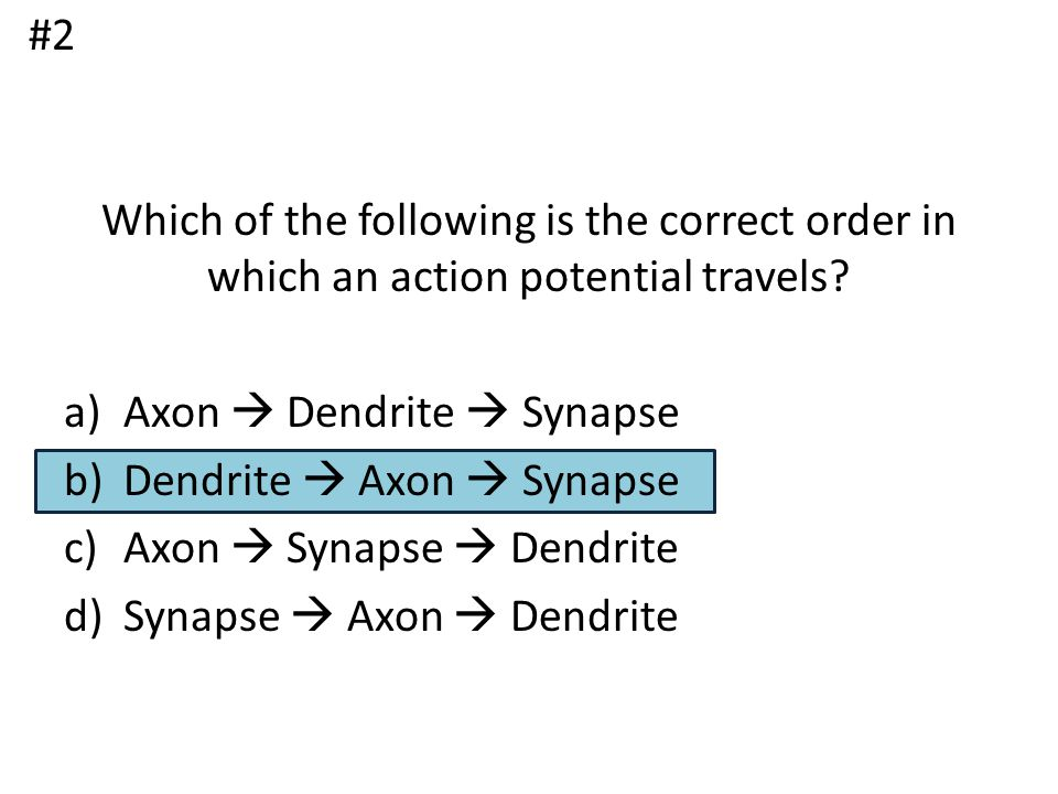 #2 Which of the following is the correct order in which an action potential travels Axon  Dendrite  Synapse.