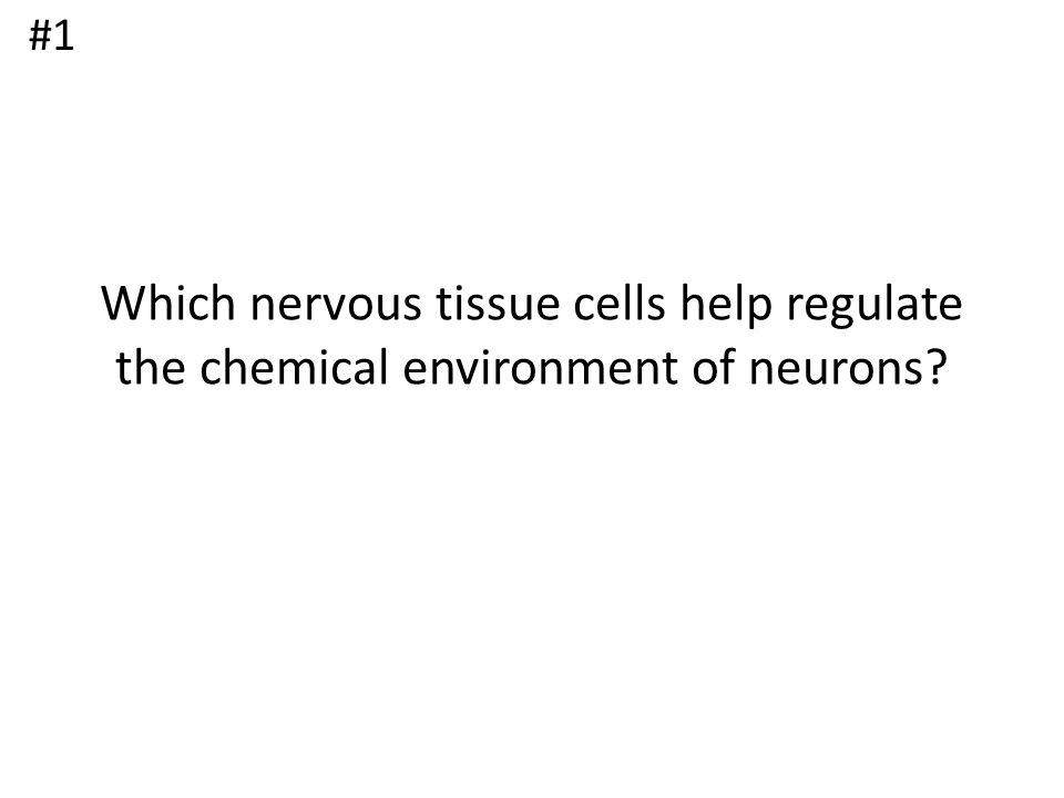 #1 Which nervous tissue cells help regulate the chemical environment of neurons