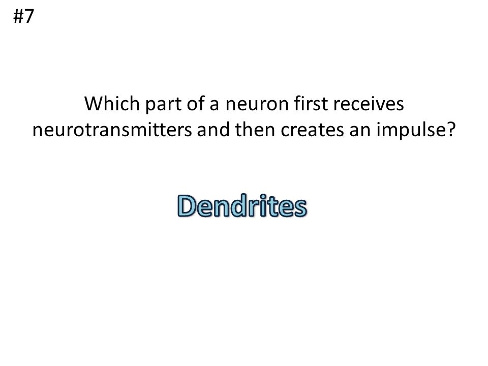 #7 Which part of a neuron first receives neurotransmitters and then creates an impulse Dendrites