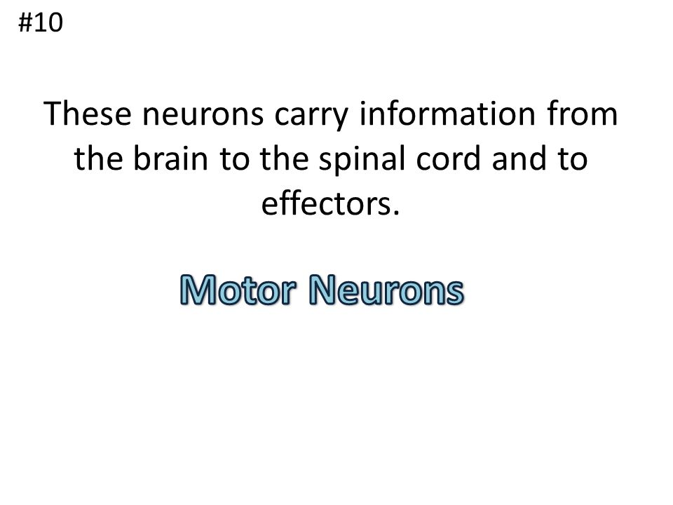 #10 These neurons carry information from the brain to the spinal cord and to effectors.
