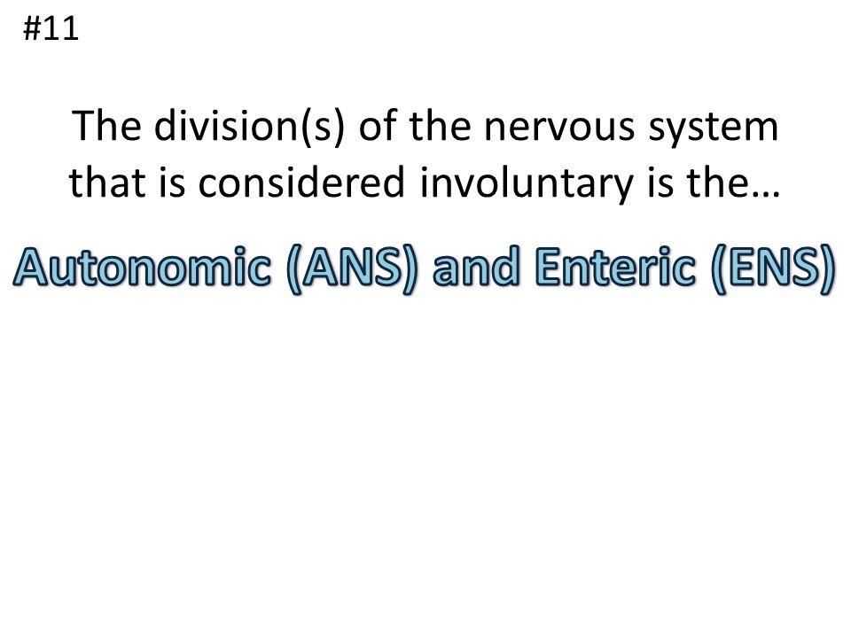 Autonomic (ANS) and Enteric (ENS)