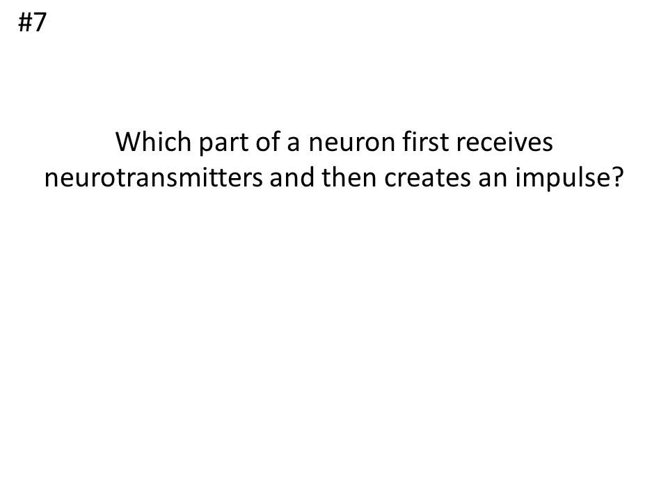 #7 Which part of a neuron first receives neurotransmitters and then creates an impulse