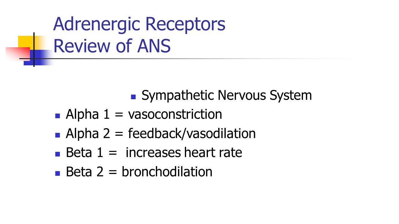Adrenergic Receptors Review of ANS