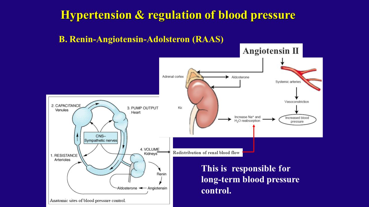 Hypertension & regulation of blood pressure